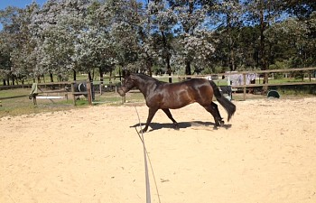 Lunging